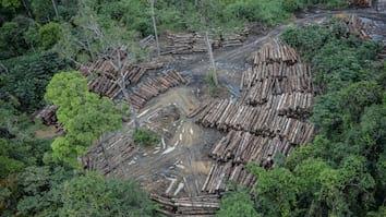 Os 10 países com maior taxa de desmatamento no mundo